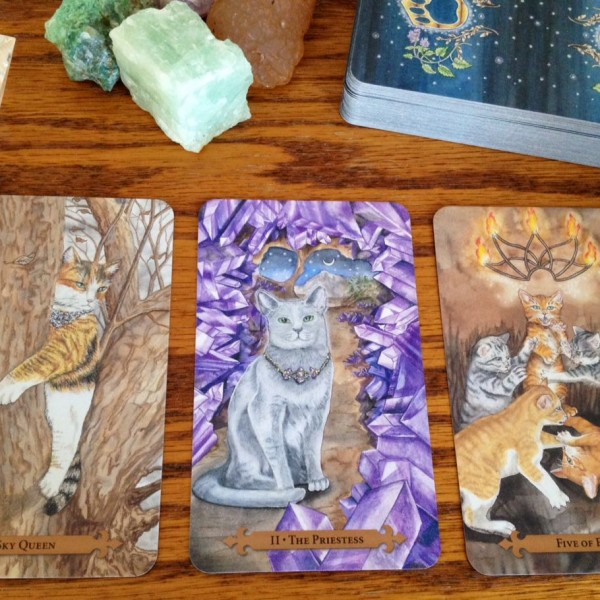 Mystical-Cats-Tarot-3-600×600