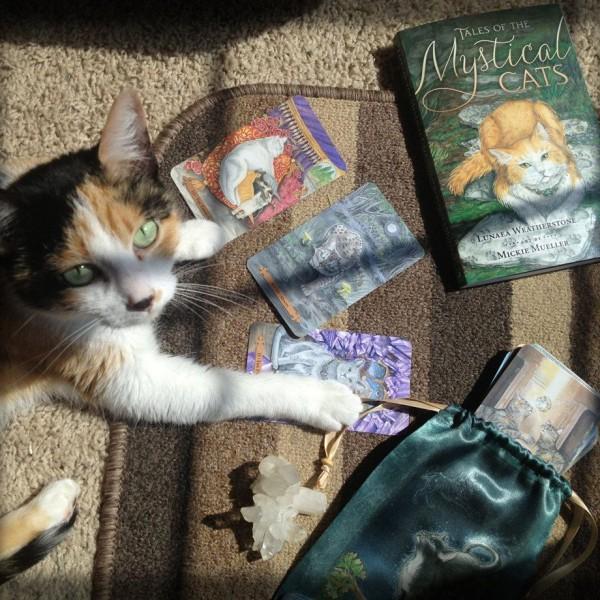 Mystical-Cats-Tarot-4-600×600