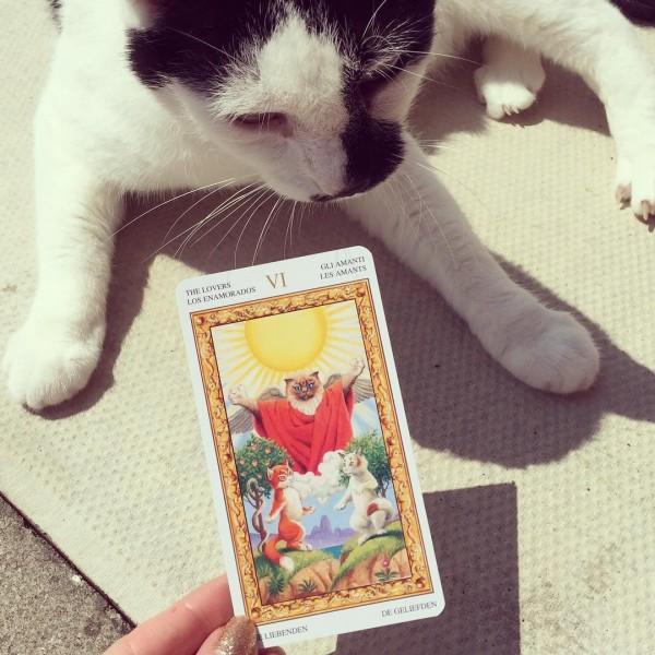 Tarot-of-White-Cats-4-600×600